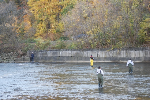 Humber River salmon fishing Toronto