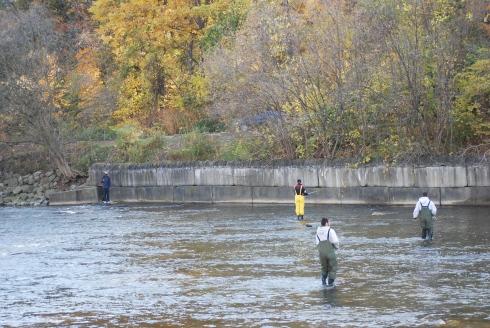 Humber River salmon fishing Toronto