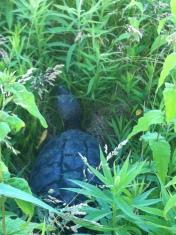 Humber Bay tortoise bike Toronto